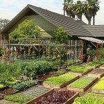 Como ter uma horta caseira