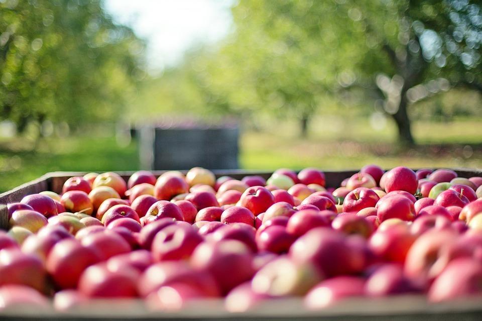maçãs para dor de cabeça