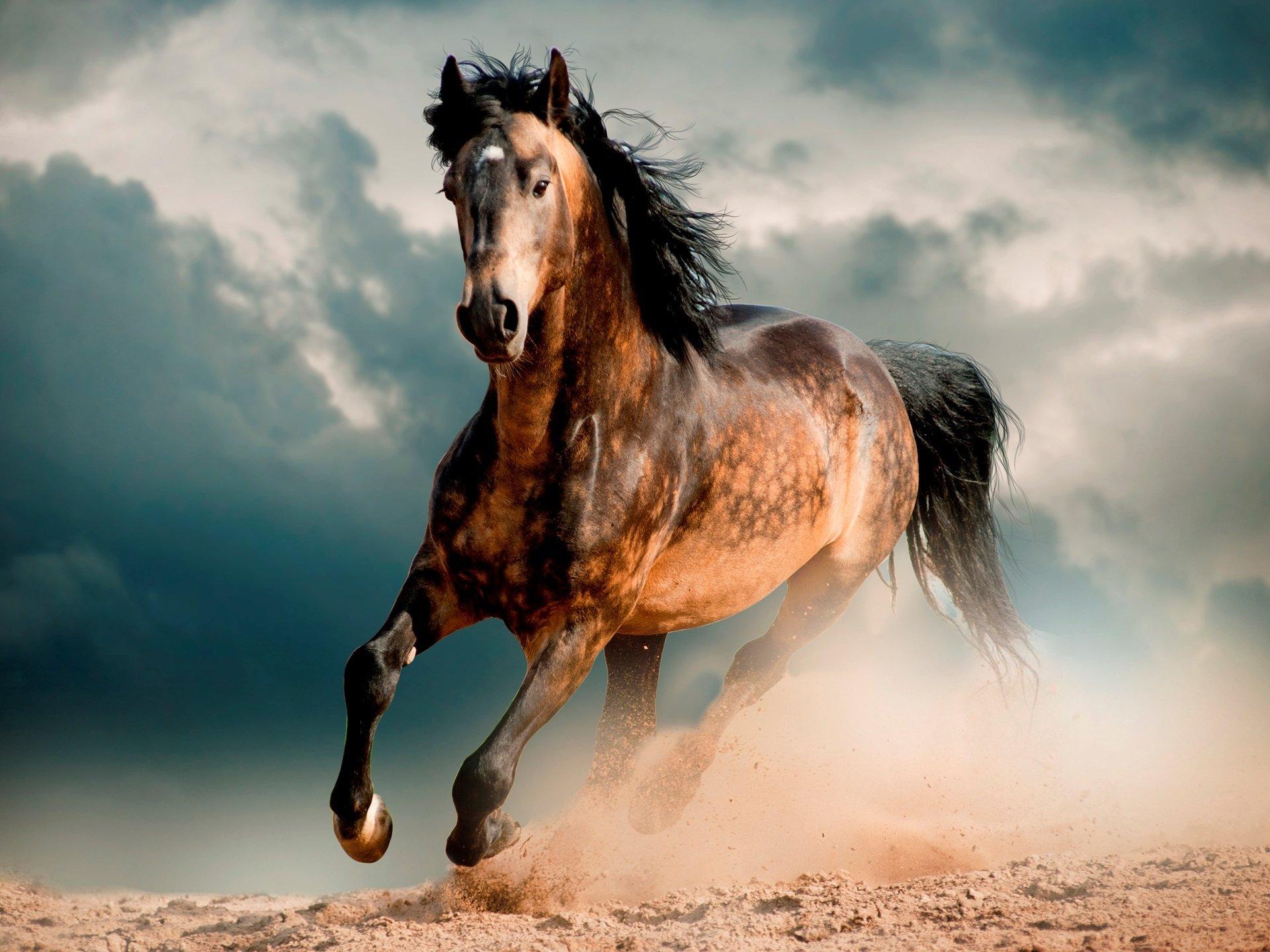 O Cavalo aparece em quase todas as mitologias, seja por escrito, folclore ou realidade.