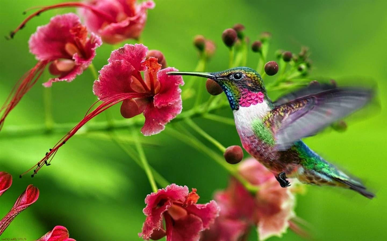 Foto de beija flor na flor 96