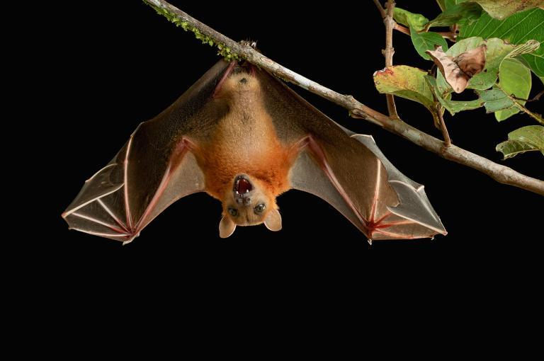 A sabedoria do morcego inclui a morte xamânica, o renascimento, a iniciação, a visualização de vidas passadas, a polinização de novas ideias, a transição, o sofrimento compreensivo, o uso do som vibratório, a camuflagem, a invisibilidade, a capacidade de observar segredos invisíveis.