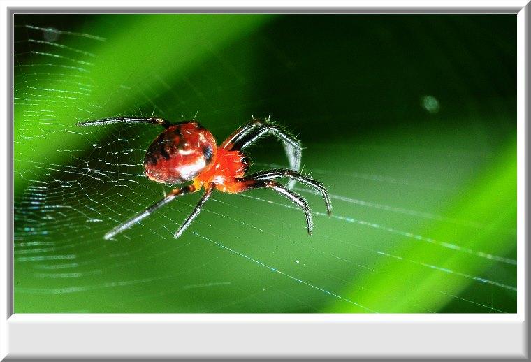 Aranha Animal de Poder Símbolo da Criação Tecelagem Nossas Realidades Balanço Infinito Passado Presente E Futuro