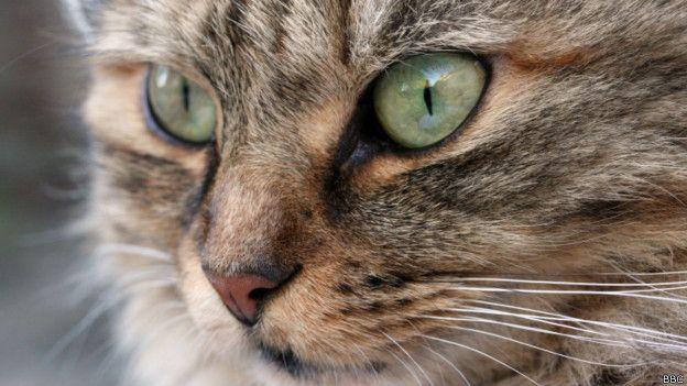 A Medicina do gato inclui a independência, a imprevisibilidade, a cura, a curiosidade, muitas vidas, magia, mistério, inteligência, capacidade de lutar quando encurralado, de ver o invisível. O amor é representado pelo gato, que nos permite ter sonhos que nos protegem.