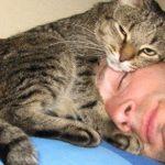 As 9 raças de gatos que se apegam mais rápido aos donos
