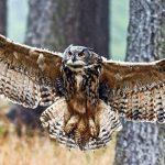 Coruja animal de poder símbolo da sabedoria