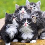 Receitas caseiras de comida para gato