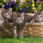 Receitas caseiras de comida para gatos parte 2