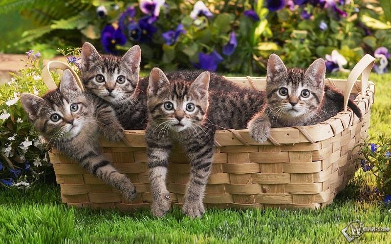 Na 2º parte de receitas caseiras para gatos vamos ver alimentos naturais feitos com outras carnes, muito gatos preferem frango ou carne no lugar de peixe.