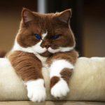 Comida caseira para gato e comida crua para gato