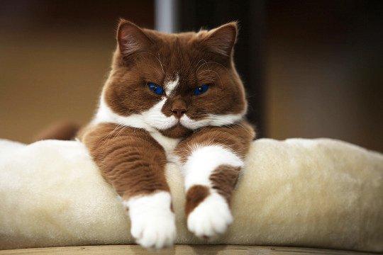 Existe um abismo entre donos de gatos que alimentam seus pets com comida caseira e veterinários que alertam que, sem controle de qualidade, os riscos de contaminações por bactérias ou deficiências nutricionais são altos.
