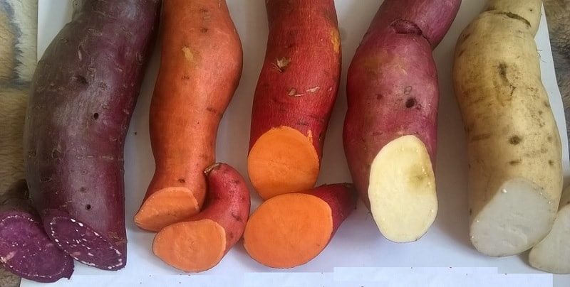 Batatas-doces são consideradas uns dos mais importantes vegetas vegetais produzidos para consumo no mundo. Nutricionalmente, possuem altas taxas de potássio, Vitaminas A, E e C, são ricas em carboidratos e oferecem boa quantidade de antioxidantes.