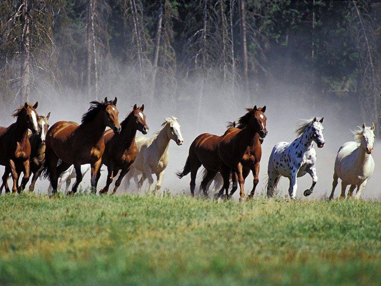 Em nosso primeiro post falamos sobre a influencia do cavalo,, nesse poste falaresmo sobre suas cores e o que elas representam.