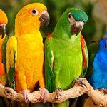 Animal Espiritual Papagaio