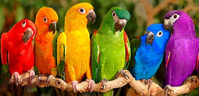 O Papagaio também pode simbolizar uma pessoa no seu cotidiano que é excêntrica e obnóxia. Também pode significar que você ou alguém próximo está sendo repetitivo ou até mesmo zombando.