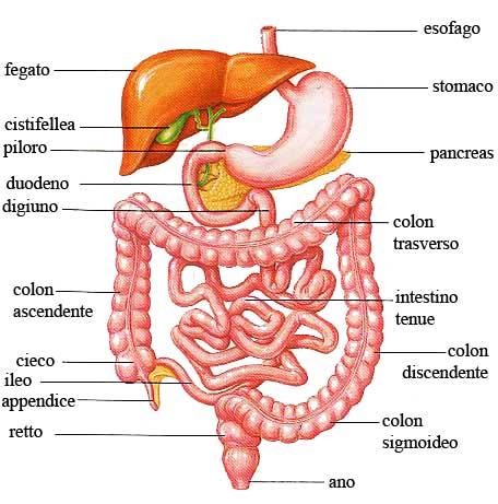 Constipação intestinal, prisão de ventre, obstipação, escolha! Vivernatural.com.br