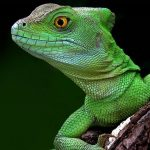 Animal Espiritual Lagarto
