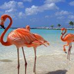Animal Espiritual Flamingo