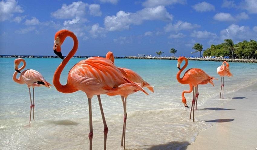 O Flamingo Está Em Extinção Animal Espiritual Flam...