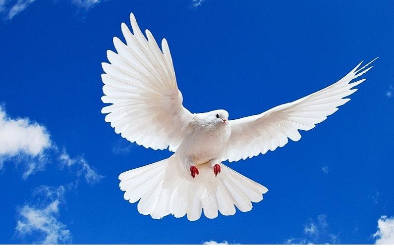 Se a Pomba atravessou sua trilha... Ela pode o estar lembrando de que em ordem de voar, você deve saber quando mover suas asas.