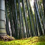 Propriedades mágicas de bambu