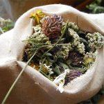 O poder das ervas e plantas mágicas