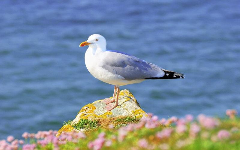 Se a Gaivota atravessou sua trilha....É hora de avaliar as coisas a partir de uma perspectiva diferente. Pois a gaivota está propondo tirar um tempo de paz.