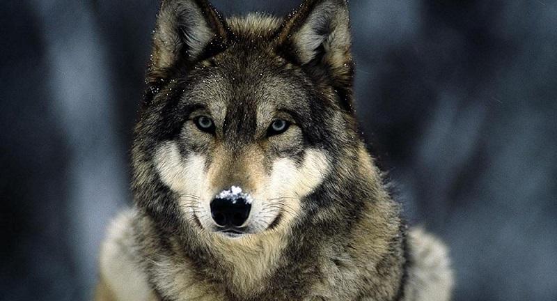 Ele o está lembrando de que ainda que você se veja como uma criatura civilizada, ainda é um animal com um espírito selvagem