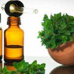 Tudo sobre o óleo essencial de orégano