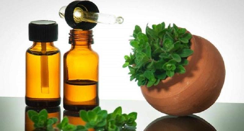 Algum tempo atrás, o óleo essencial de orégano não era tão popular e poucos sabiam sobre suas propriedades e aplicação na aromaterapia.