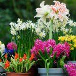 Algumas plantas mágicas que valem a pena ter em casa – parte 1