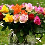 Rosas: a linguagem das cores