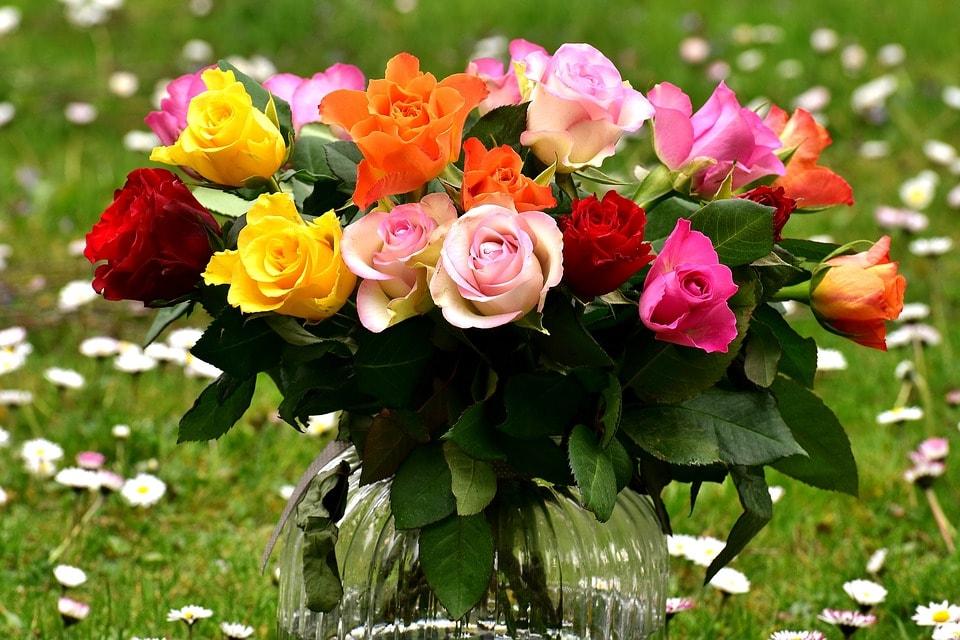 rosas cores