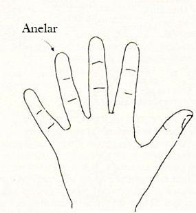 anelar dedos quiromancia magia