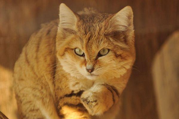 gato amarelo cores casa