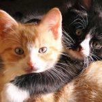 Gatos de diferentes cores em casa