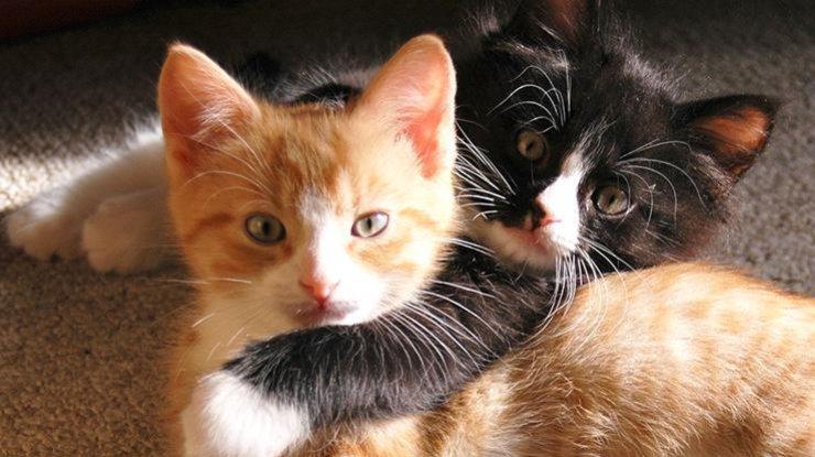 gatos cores casa
