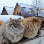 Sinais relacionados a gatos