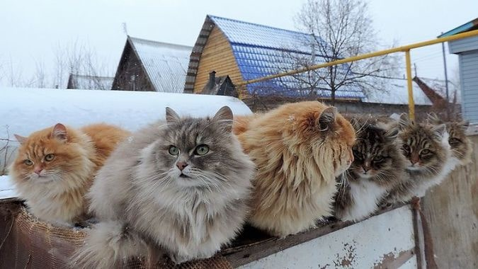 gatos sinais felicidade
