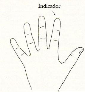 dedos indicador leitura mãos