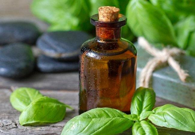 óleo essencial de manjericão