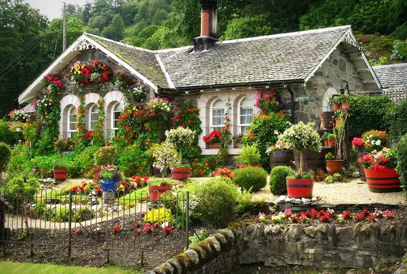 planta jardim magia casa