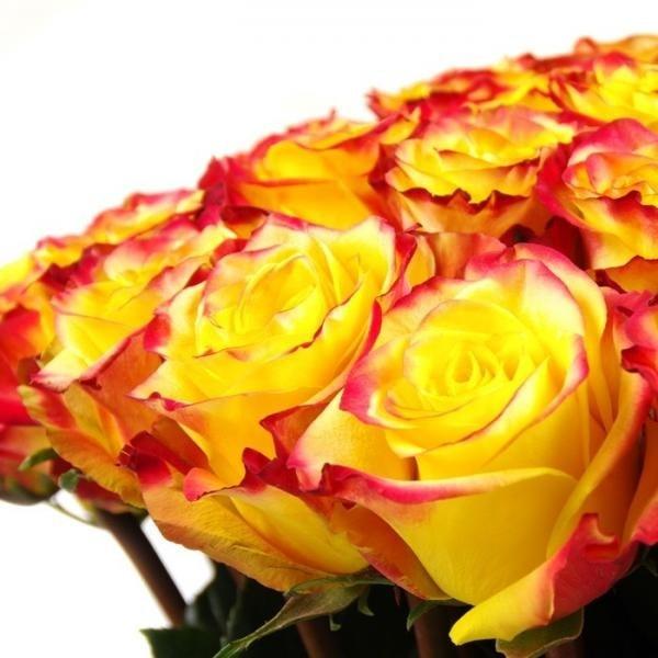 Óleo essencial de rosas pele saúde beleza juventude sexualidade