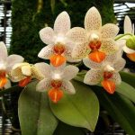 Propriedades mágicas das orquídeas
