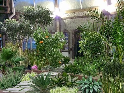 plantas casa magia proteção