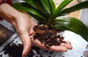 substrato orquídeas