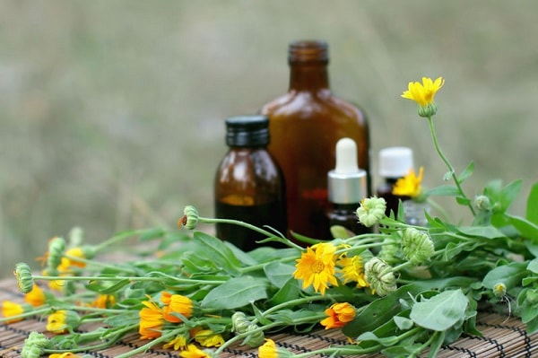 óleo calendula saúde cosméticos pele