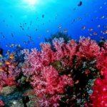 Animal Espiritual Coral