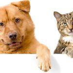 Aromaterapia para animais