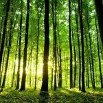 Magia das árvores