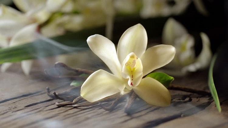 baunilha aromaterapia stress ansiedade saúde